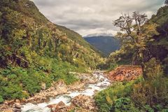 Mountain stream in canyon in Chile stock photography