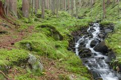 A mountain stream flows inside the forest stock photo