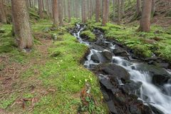 A mountain stream flows inside the forest royalty free stock images