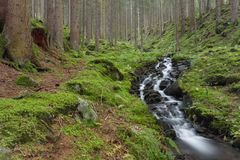 A mountain stream flows inside the forest royalty free stock photo