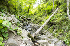 Mountain stream. That flows into the river Zhinets in ukrainian reserve Royalty Free Stock Photos