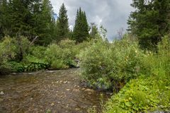 The mountain stream flows in the taiga, amidst lush vegetation. Near the village of Belogorsk, Tisulsky district, Kemerovo region. The mountain stream flows in Stock Photography