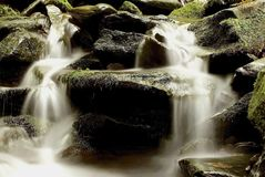 mountain stream in the forest Royalty Free Stock Image