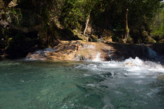 Mountain stream. In the forest Stock Photography