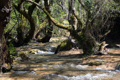 Mountain stream. In the forest Royalty Free Stock Photography