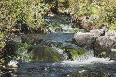 Mountain stream in the forest. stock images