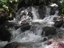 Mountain stream in the forest royalty free stock photography