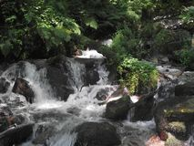 Mountain stream in the deep forest stock image