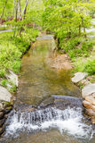 Mountain Stream Through Forest Royalty Free Stock Image