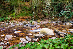Mountain stream in a forest. Mountain stream at the Khao Sok National Park, Surat Thani Province, Thailand. Soft focus Stock Images