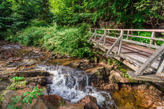 Mountain stream in a forest. Poland, Europe Royalty Free Stock Photo