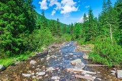 Mountain stream in the forest, scenic landscape. On a sunny day stock images