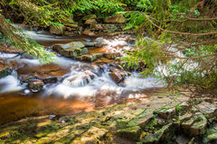 Mountain stream among the forest Royalty Free Stock Photography
