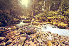 Mountain stream in the forest. Stock Photo