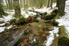 Mountain stream in forest at winter time Royalty Free Stock Photography