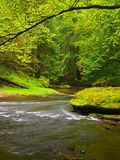 Mountain stream in fresh green leaves forest after rainy day.  Royalty Free Stock Image