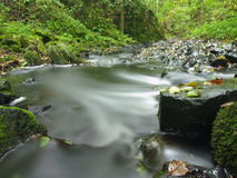 Mountain stream in fresh green leaves forest after rainy day.   Royalty Free Stock Images