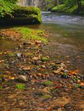 Mountain stream in fresh green leaves forest after rainy day. First autumn colors in evening sun rays.The end of summer at mountai Stock Image