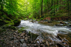 Mountain stream in green forest Royalty Free Stock Photos