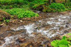 Mountain stream in green forest Royalty Free Stock Images