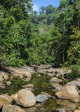 Mountain stream in green forest Stock Images