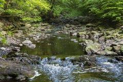 Mountain stream through green forest Royalty Free Stock Photo