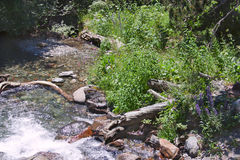 Mountain stream. In the green forest in spring Royalty Free Stock Image
