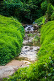 Mountain stream in green. Forest at spring time royalty free stock photo