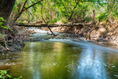 Mountain stream in green forest at spring time Royalty Free Stock Photo