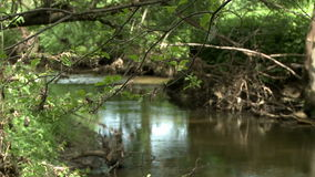 Mountain stream in green summer forest stock video footage