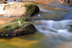 A mountain stream Royalty Free Stock Photo
