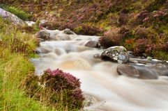 Mountain stream and heather Stock Image