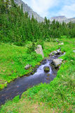 Mountain stream on a high alpine trail in glacier national park Royalty Free Stock Photo