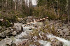 Mountain stream in High Tatras, Slovakia. View of Mountain stream in High Tatras, Slovakia stock image