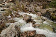 Mountain stream in High Tatras, Slovakia. View of Mountain stream in High Tatras, Slovakia Stock Photography