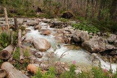 Mountain stream in High Tatras, Slovakia. View of Mountain stream in High Tatras, Slovakia Royalty Free Stock Images