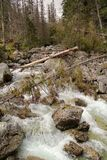 Mountain stream in High Tatras, Slovakia. View of Mountain stream in High Tatras, Slovakia Stock Image