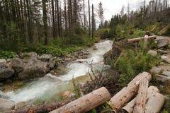 Mountain stream in High Tatras, Slovakia. View of Mountain stream in High Tatras, Slovakia Stock Images
