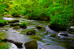 Mountain stream in japan Royalty Free Stock Images