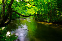 Mountain stream in japan Stock Images