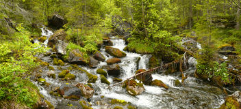 A mountain stream in the kandersteg area Royalty Free Stock Photos