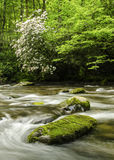 Smoky Mountain Mountain Laurel River Landscape NC Stock Photography