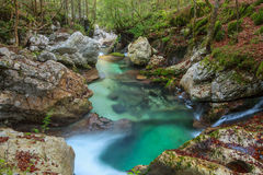 Mountain stream in the Lepena valley. In Slovenia Royalty Free Stock Images