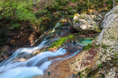 Mountain stream in the Lepena valley. In Slovenia Royalty Free Stock Photos