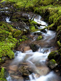 Mountain stream. The lush green mountain stream in north Idaho Stock Photography