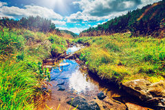Mountain stream in the morning Royalty Free Stock Image