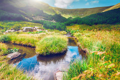 Mountain stream in the morning Royalty Free Stock Photography