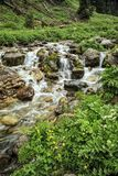 Mountain stream. Mountain stream among the stones and plants in the summer morning Royalty Free Stock Images