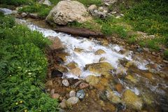 Mountain stream. Mountain stream among the stones and plants in the summer morning Royalty Free Stock Photos