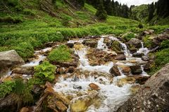 Mountain stream. Mountain stream among the stones and plants in the summer morning Stock Photography